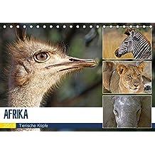 AFRIKA - Tierische Köpfe (Tischkalender 2018 DIN A5 quer): Porträts in freier Wildbahn (Monatskalender, 14 Seiten ) (CALVENDO Tiere) [Kalender] [Jun 01, 2017] Woyke, Wibke