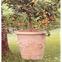 Amazonit Anfore Da Giardino In Terracotta Grandi