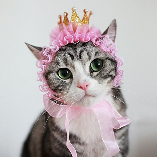 2 art haustier hüte für geburtstagsfeier katze hund krone magie mützen schön und...