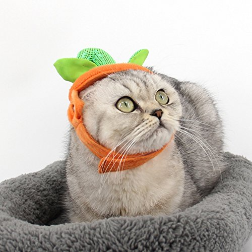 Yimosecoxiang New Halloween Pet Kostüm Zubehör für Kinder Erwachsene Besondere Fest bietet Halloween Party Lovely Pets Katzen Kürbis Hat mit Einfach Verstellbare Magic Tape (Einfach Scary Halloween Requisiten)