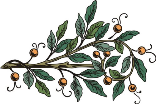 Farbige Ernte (PEMA INDIGOS UG - Wandtattoo Wandsticker Wandaufkleber Aufkleber bunt farbig MF416 Grapefruit Ernte 180 x 119 cm)