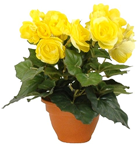 MICA Decorations 977002 Blumen, Begonia, gelb