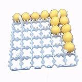 2PCS quadratisch 36Huhn Ente Eier Inkubator Transport Tray Holder