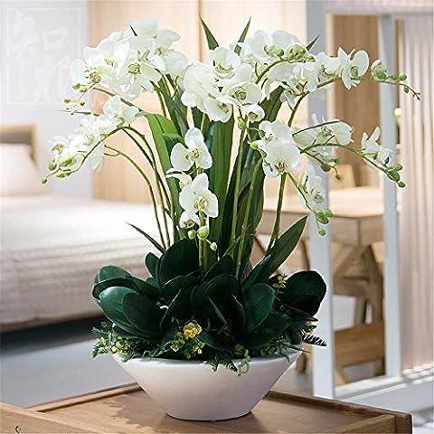 Fiori Artificiali Set per Hotel matrimonio decorazioni FESTE in casa?Emulazione Fiore Vaso Phalaenopsis Boutonniere Set, Bianco, Verde, Celle