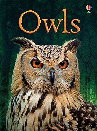 BEG Owls (Beginners Series)