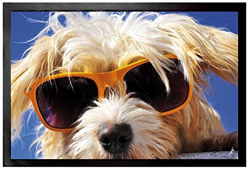 Felpudos Perros Cool Felpudo Alfombrilla (60 x 40cm)