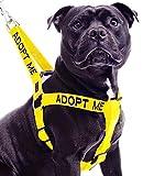 ADOPTIER MICH Gelb Farbe Coded Nylon L-XL Non-Pull-Hundegeschirr (New Home benötigt) Spenden zu Ihrem lokalen Charity