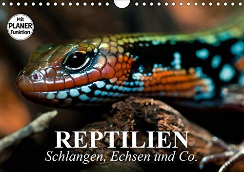 Reptilien. Schlangen, Echsen und Co. (Wandkalender 2020 DIN A4 quer): Urzeitliche Anpassungskünstler und schützenswerte Wesen (Geburtstagskalender, 14 Seiten ) (CALVENDO Tiere)