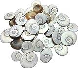 Shraddha Shree Gems Original Energized G...