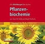 """Die Abbildungen des Buches """"Pflanzenb..."""