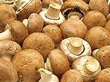Kit Coltivazione Funghi Prataiolo Champignon marrone Crema Substrato Panetti Funghi Casa Giardino