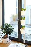 Willys-Fachmarkt Kräuer-und Pflanzenleiter Vega in weiß für Fenster