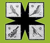 Songtexte von North Sea Radio Orchestra - Birds