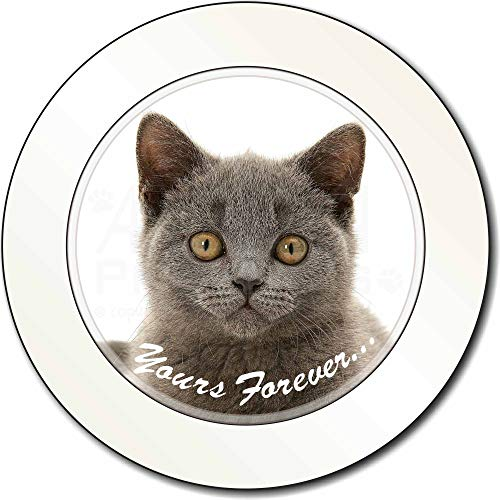 Advanta - Tax Disc Holders Silver Blue Cat ' Yours Forever' AutovignetteGenehmigungsinhaber Geschenk