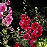 Sophora japonica seme dieci piedi rosso semi cotti semi di fiori di stagione Rong Kwai recinzione fiori circa 100 semi di 1