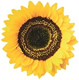 Paper House M-0074E 6-Pack Die Cut Refrigerator Magnet, Common Sunflower