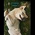 DOGTOR: anecdotes d'un vétérinaire canin cabot