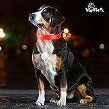 Collar LED para Perros My Pet EZ