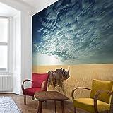 Apalis Vliestapete Nashorn in der Savanne Fototapete Quadrat | Vlies Tapete Wandtapete Wandbild Foto 3D Fototapete für Schlafzimmer Wohnzimmer Küche | Größe: 240x240 cm, blau, 95397