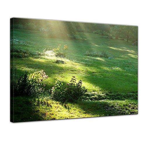 Herbst Blatt 2-licht (Wandbild - Wiese - Bild auf Leinwand - 60 x 50 cm - Leinwandbilder - Bilder als Leinwanddruck - Landschaften - Natur - Sonnenstrahlen auf Einer grünen Wiese)