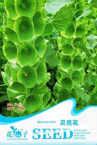 Portal Cool Typ 12: Mehrjährige Bonsai-Trauben-Samen Sukkulenten Fruchtpflanzen-Samen Lkr8