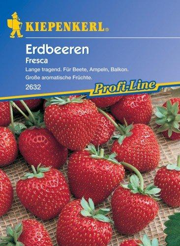kiepenkerl-erdbeeren-fresca