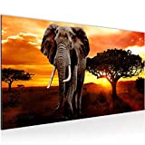 Bilder Afrika Elefant Wandbild Vlies - Leinwand Bild XXL Format Wandbilder Wohnzimmer Wohnung Deko Kunstdrucke Orang 1 Teilig - MADE IN GERMANY - Fertig zum Aufhängen 001212a