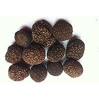 1 libra (454 gramos) Famosa Himalaya negro Trufa entera seca en tarro