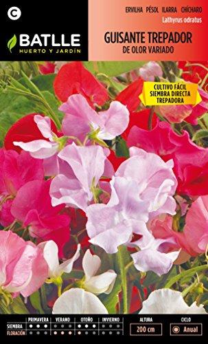semillas-batlle-094401bols-guisante-trepador-de-olor-variado