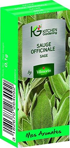 KG BY VILMORIN 8200014 Jardinières Sauge officinale Vert 7 x 3 x 2 cm