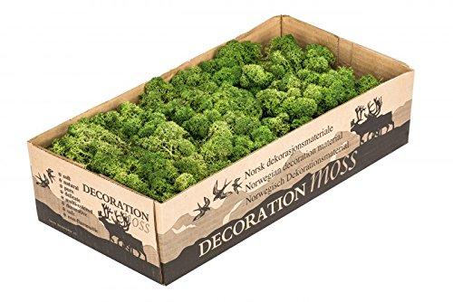 NaDeco Islandmoos Moos-grün 500g   Rentier Moos in moosgrün   Reendier Moos   Deko Moos   Bastel Moos   Dekomoos