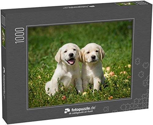 Puzzle 1000 Teile Welpen des Labrador-Retrievers auf dem Rasen sitzend - Klassische Puzzle, 1000/200/2000 Teile, in Edler Motiv-Schachtel, Fotopuzzle-Kollektion \'Tiere\'