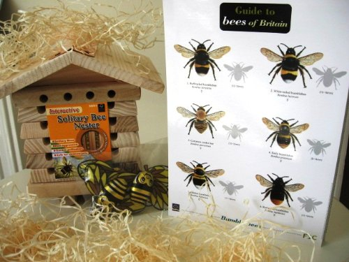 Solitary Bee Gift Box for gardeners and nature lovers