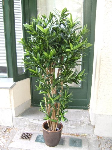 Künstlicher Croton Goldfinger Spitzen-Qualität