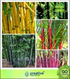 Pinkdose Bamboo Combo Pack - All In One-Pack-Bambus Samen Seed