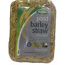 Blagdon Large Barley Straw Bale