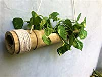 Hang this home decor from your balcony, terrace and see how irresistible it looks, this hanging planter is made of actual bamboo. It can also be an exclusive personalized gift, decorate your home and portico with this home decor.