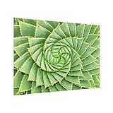 Bilderwelten Spritzschutz Glas - Spiral Aloe - Querformat 3:4, HxB: 59cm x 80cm