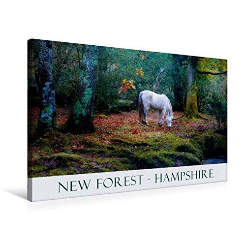 Premium Textil-Leinwand 75 cm x 50 cm quer, Ein Bild aus dem Kalender New Forest Hampshire | Wandbild, Bild auf Keilrahmen, Fertigbild auf echter Leinwand, Leinwanddruck (CALVENDO Natur) (New Hampshire-kalender)