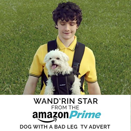wandrin-star-from-the-amazon-prime-dog-with-a-bad-leg-tv-advert
