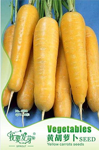 Arc ont des graines comme les graines cadeau végétales pour jardin plantation 60 / paquet