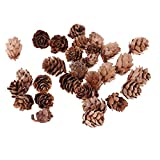 Homyl 30 Stück Echte Natürliche Kleine Tannenzapfen Floristen Kunsthandwerk Weihnachtsschmuck Ornamente