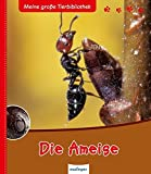 Die Ameise (Meine große Tierbibliothek)