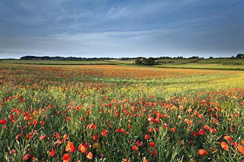 Leinwandbild Summer poppyfield
