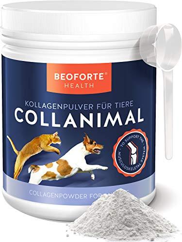 Beoforte Health Kollagen Pulver für Hunde & Katzen Nahrungergänzugsmittel - für Gelenke Mobilität & Vitaltität 500g