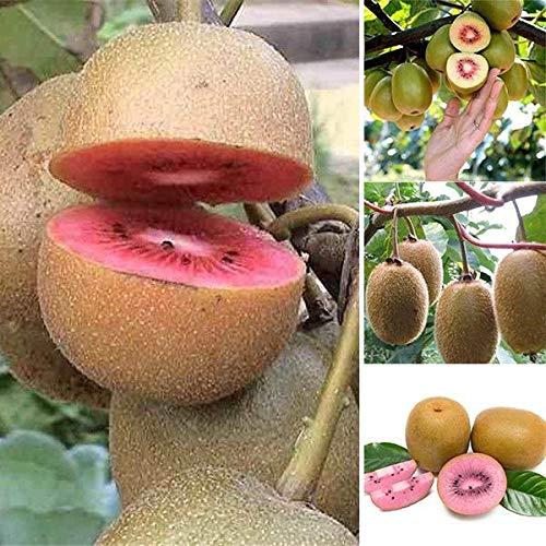 Rosa Vitamine (Keland Garten - 50pcs Selten Kiwi 'Issai' Grün/Rosa - Kletterpflanze Obstsamen Saatgu Bio Reich an Vitamin C! Baumsamen wintergart mehrjährig, geeignet für Garten/Balkon)