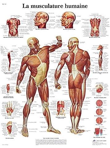 Poster Anatomie - Planche Anatomique la