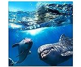 Eau Zone Wandbild auf Leinwand 60x60cm zwei neugierige Delfine im Meer