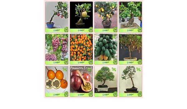 Pinkdose Bonsai Graines: Plantes dext/Ã/©rieur Combo Pomagranate Nana Violet Garden Seeds graines Fruit jaune Fruit de la passion Grapeorange citron le tamarin pomme Passion la papaye