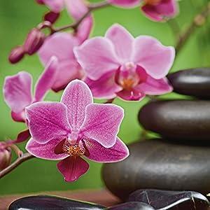 Artland Qualitätsbilder | Glasbilder Deko Glas Bilder 20 x 20 cm Zen Basaltsteine und Bambus auf Holz mit Orchideen A6NL